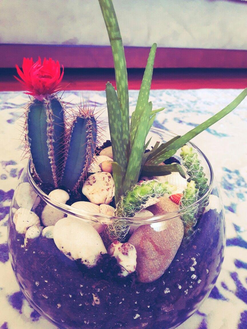 Kaktüs Evde Teraryum Yapımı Aloe Vera Cam Fanus El Emeği Gön