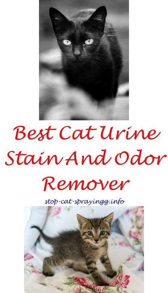 Cat dander spray walmart.Can cat spray because they want