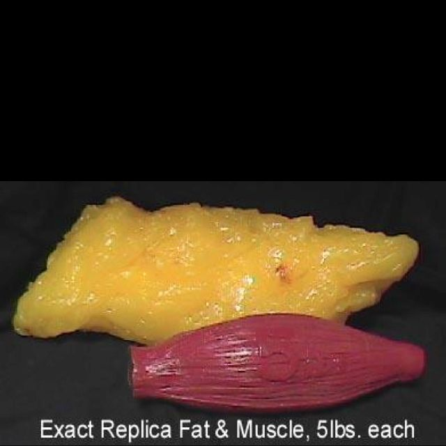 Size difference between 1 lb. fat and 1 lb muscle. Weighs the same takes up  less space!!