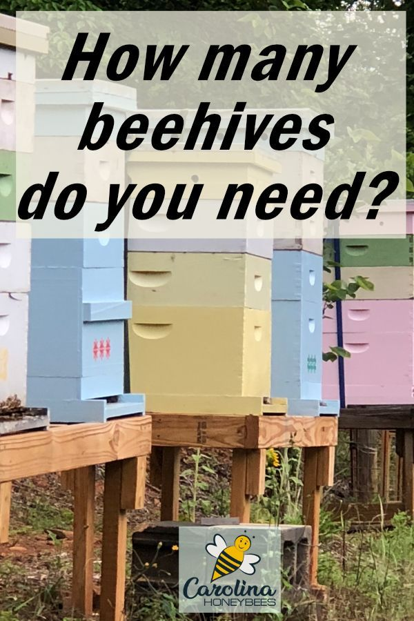 How Many Hives Does The New Beekeeper Need Com Imagens
