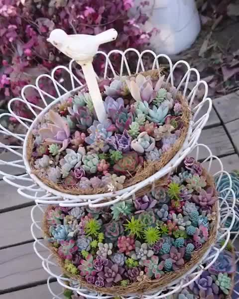 Photo of I love succulents! ❤️ #succulents #succucity