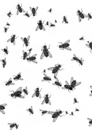 how to get rid of milkweed bugs in house