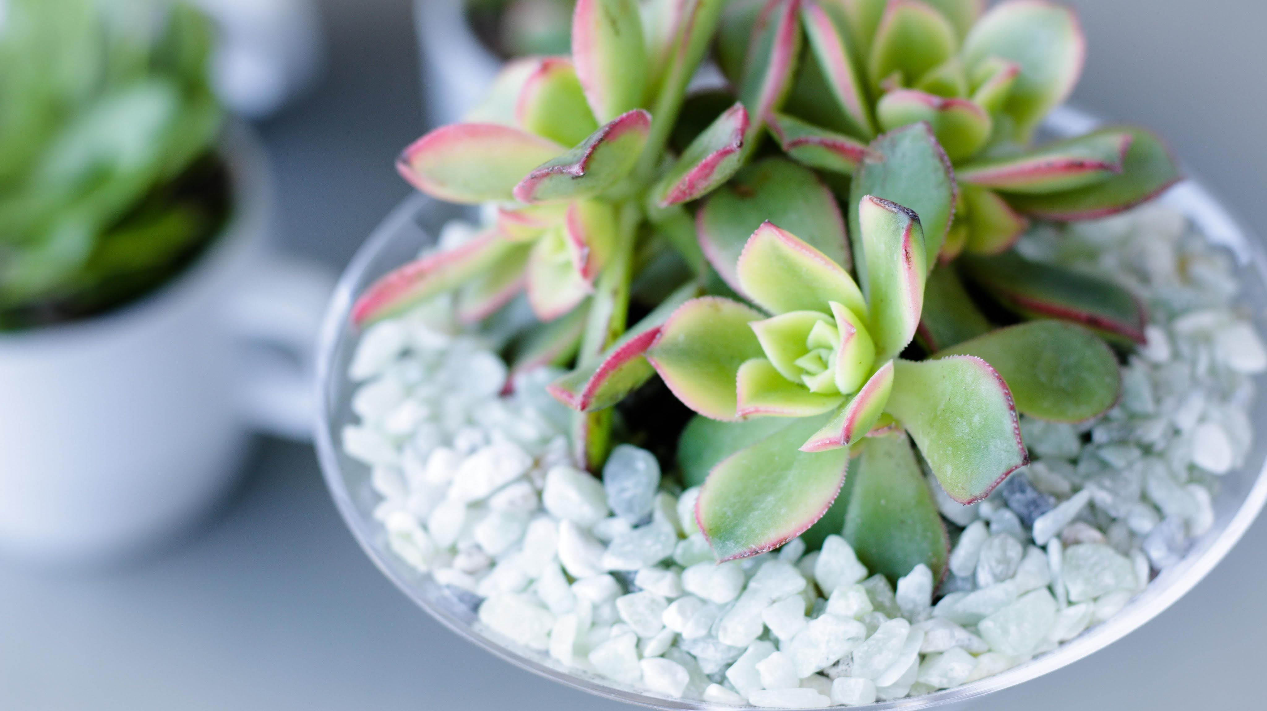 DIY Succulent Garden: How to Share and Display Potted ...