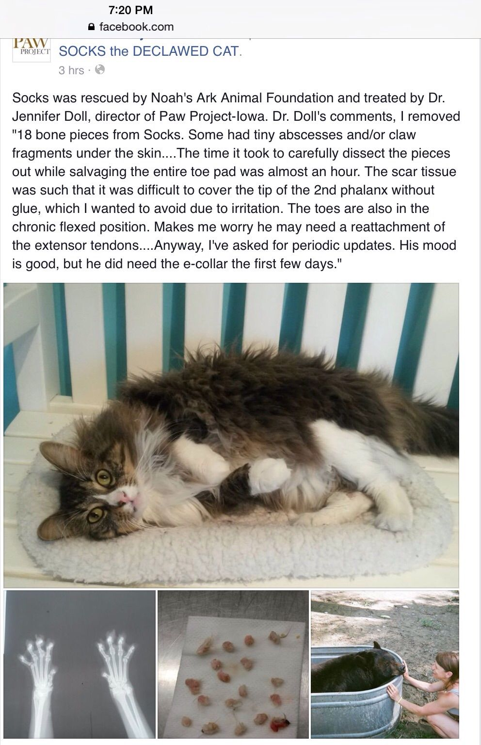 Pin On Declawing Amputation