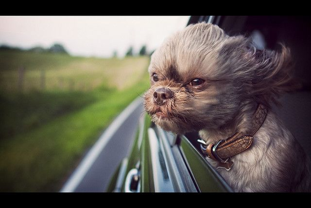 29 Shots Of Dogs Sticking Their Heads Out Of Car Windows Humor