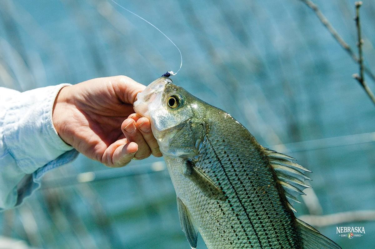The 12 Best Fishing Spots In The Omaha Area Mapped With Images Lake Activities Fish Pier Fishing