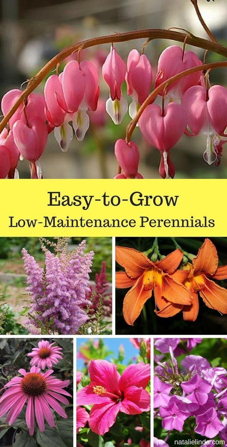 Low maintenance perennials are perfect for adorning your garden They require li