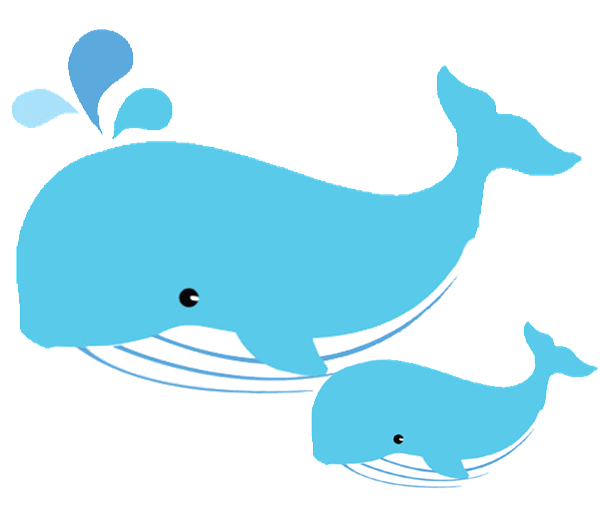 Image result for whale