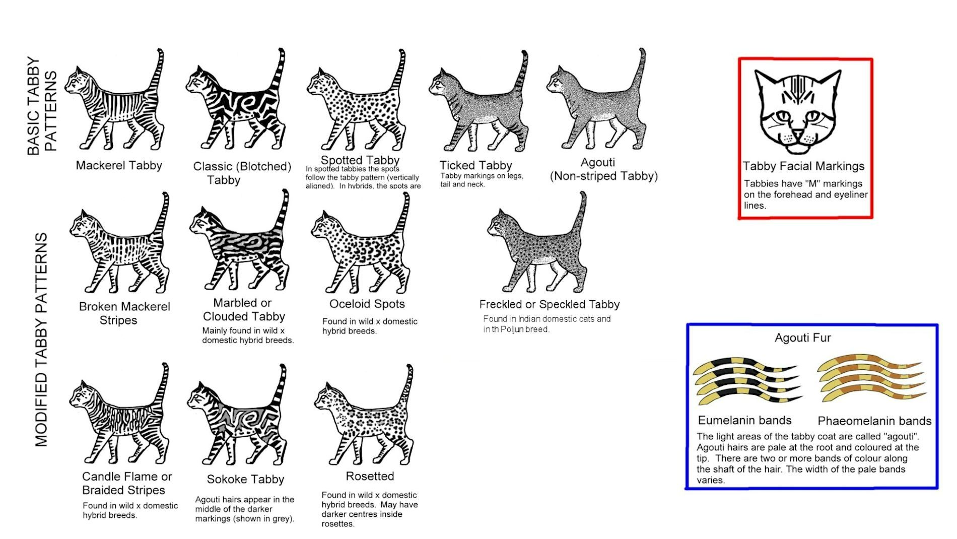 Striped Spotted And Ticked Cats Spotted Cat Cats Feline