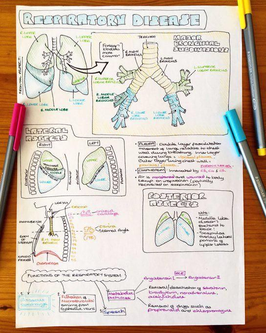 notes anatomy nursing medical study human respiratory student students science revision physiology medicine nurse sarah clifford biology apuntes college studying