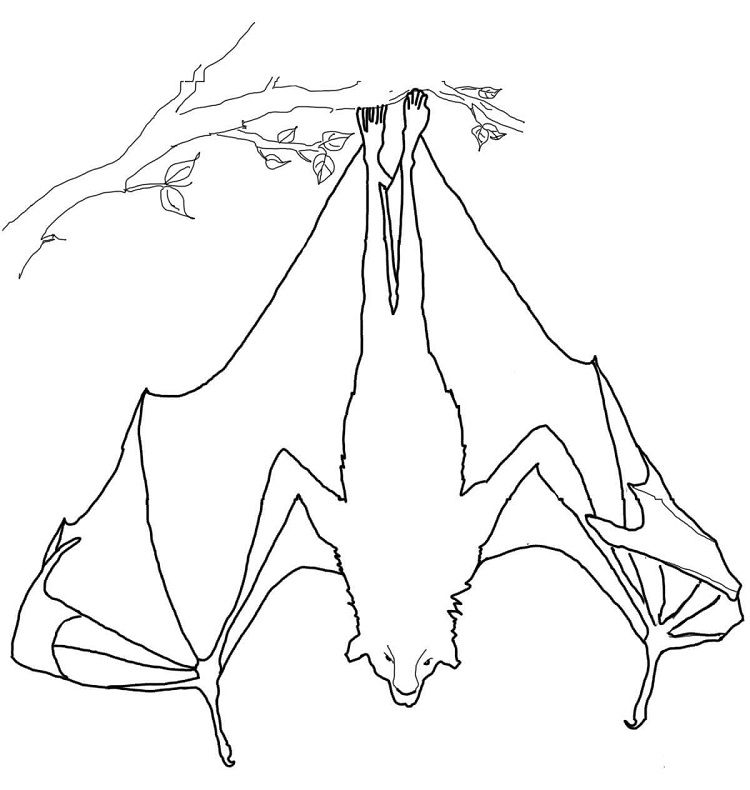 Flying Fox Bat Coloring Pages Bat Coloring Pages Hanging Bat