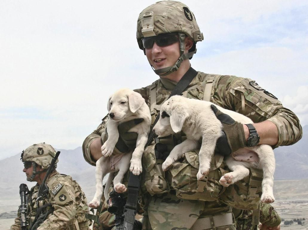 Military Puppies Of The Week In Afghanistan War Dogs Pinterest