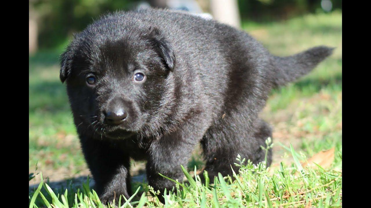 Tallahassee Fl Boston Terrier Meet Gabby Lynn A Dog For Adoption Boston Terrier Dog Boston Terrier Pug Boston Terrier