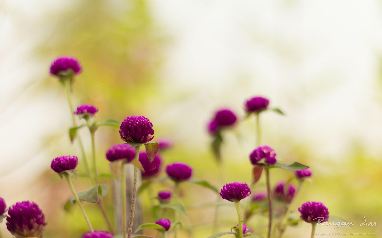 purple garden flower wallpaper atozwallpaper