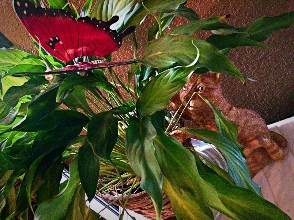 My hubby talked me out of putting my tabby back n the yard so here he is displayed with a plant my daughter gave me...with a butterfly for him to hunt...lol