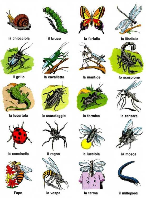 Italian Creepy Crawlies For All Your Holiday Bug Bite Needs Learn
