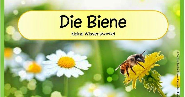 Die Biene (Wissenskartei) Diese kleine Wissenskartei zur Biene ...