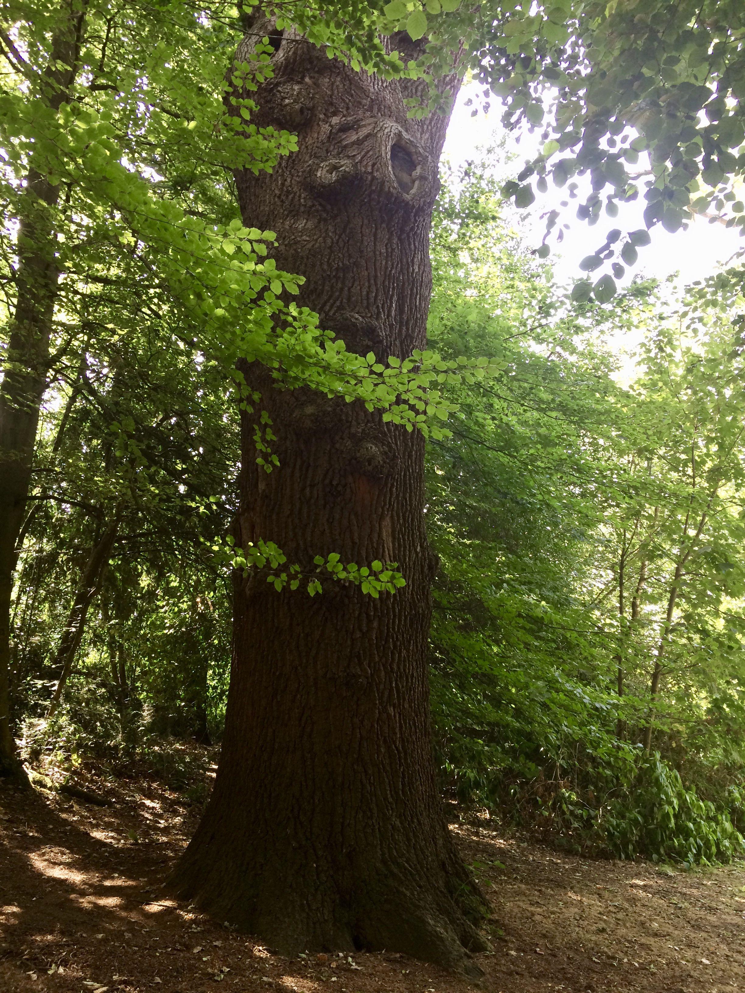 Horsham Park | Plants, Tree, Garden