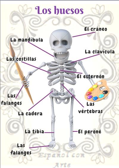 Los huesos del cuerpo humano en Español con Arte | Vocabulario con ...