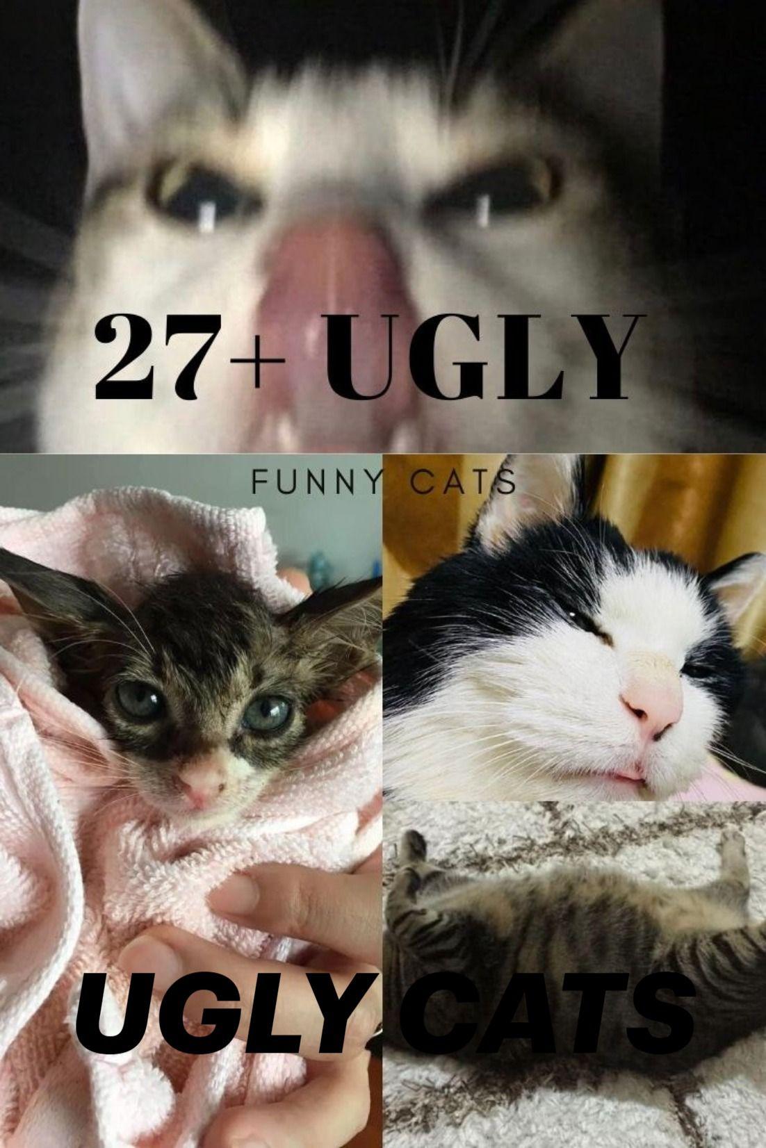 Pin On Funny Crazy Liquid Alien Cats