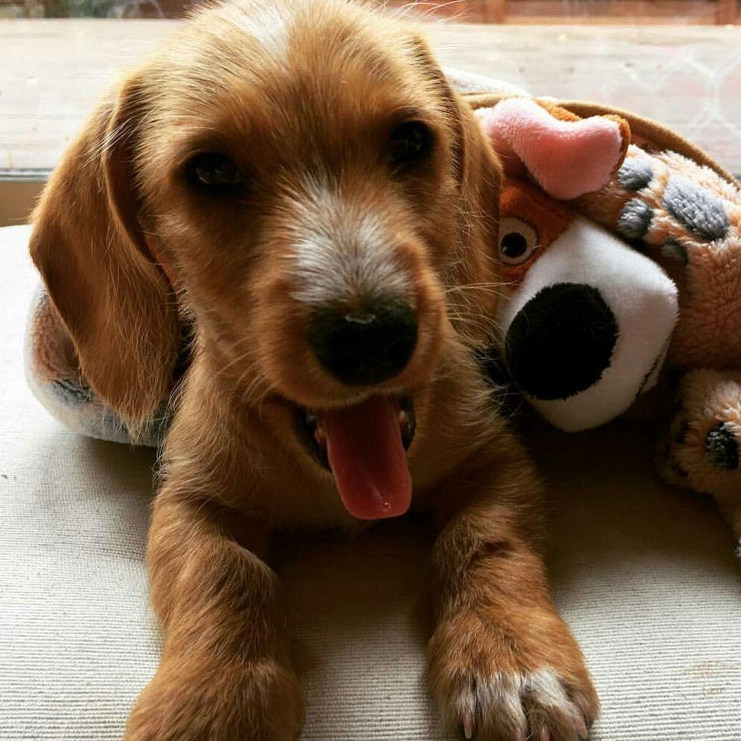 Puppies For Sale Ohio Craigslist - CREGLIS
