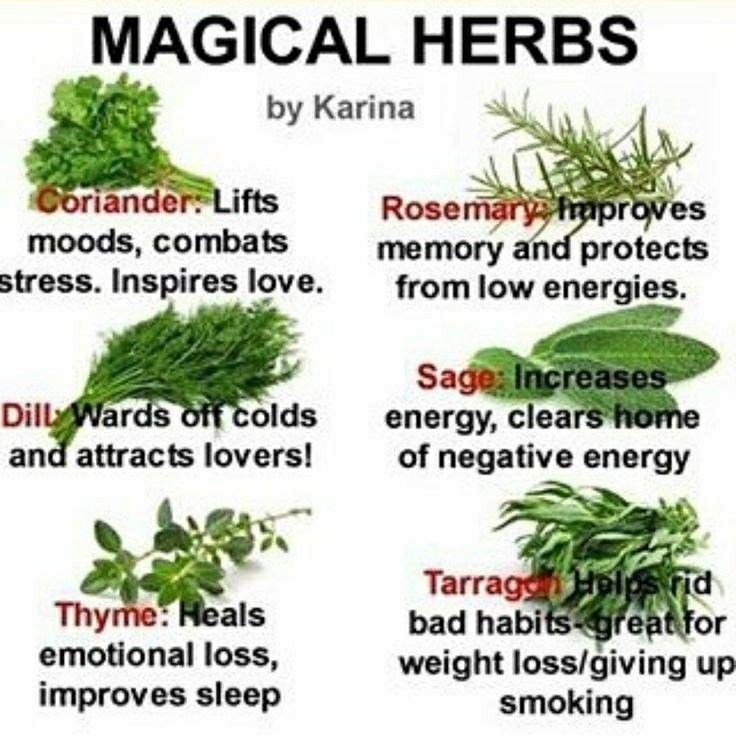 Photo of Power of Herbs