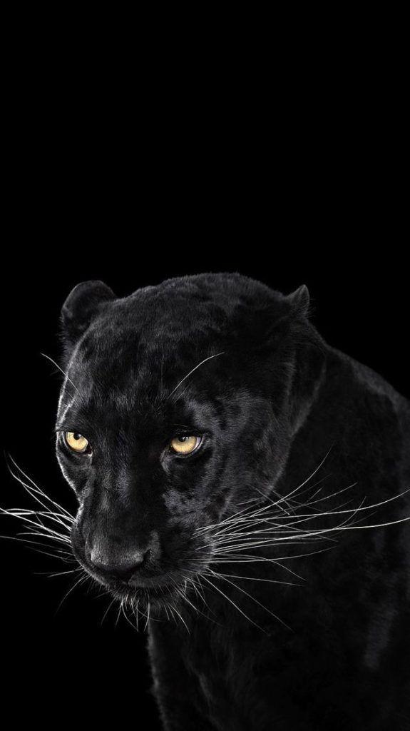 iphone x wallpaper hd 1080p black Black jaguar animal