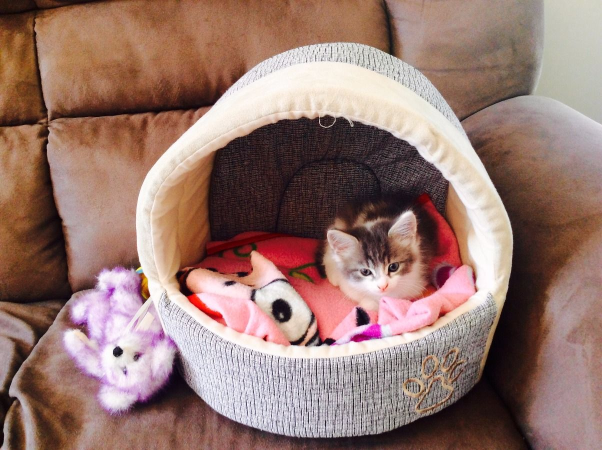 Gorgeous Little Kitten Enjoys Its New Bed Kittens And Puppies Kitten Beds Cats And Kittens