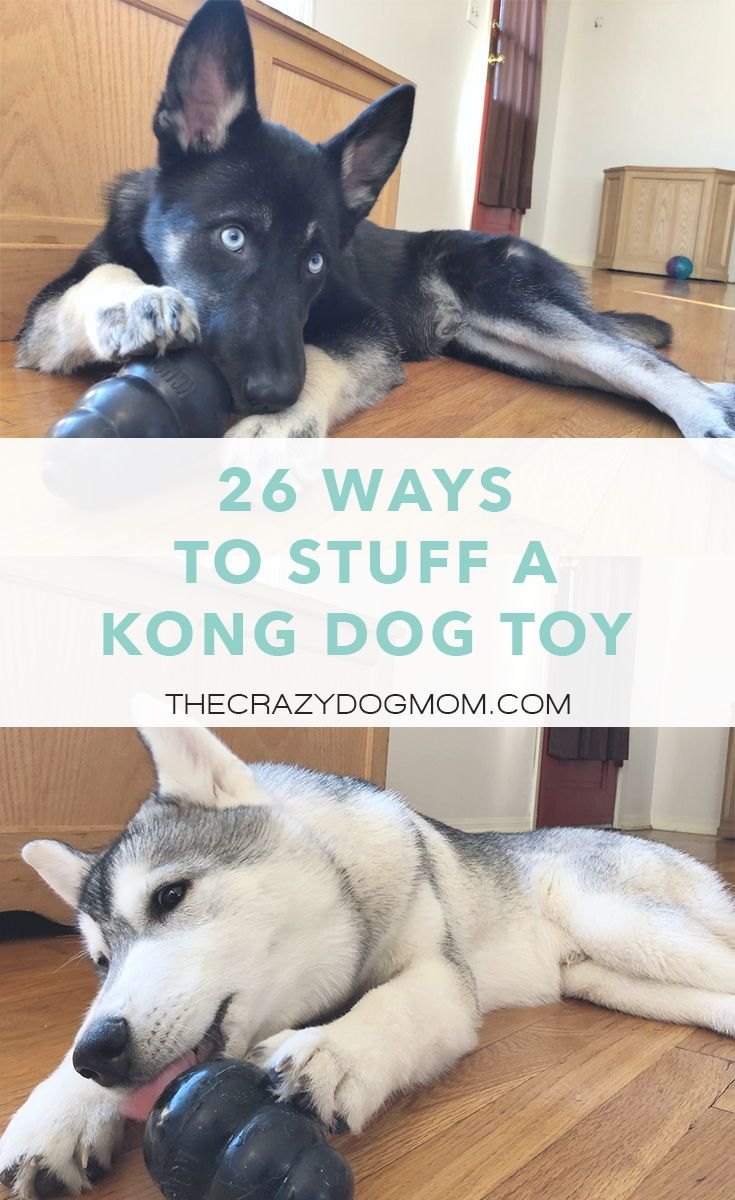One Of The Most Popular Brands Of Dog Toys Nowadays Is Kong The