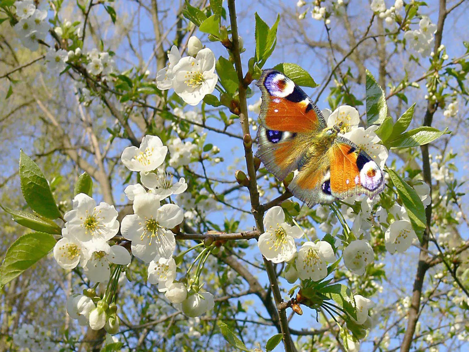 картинки на тему весна: 25 тыс изображений найдено в ...