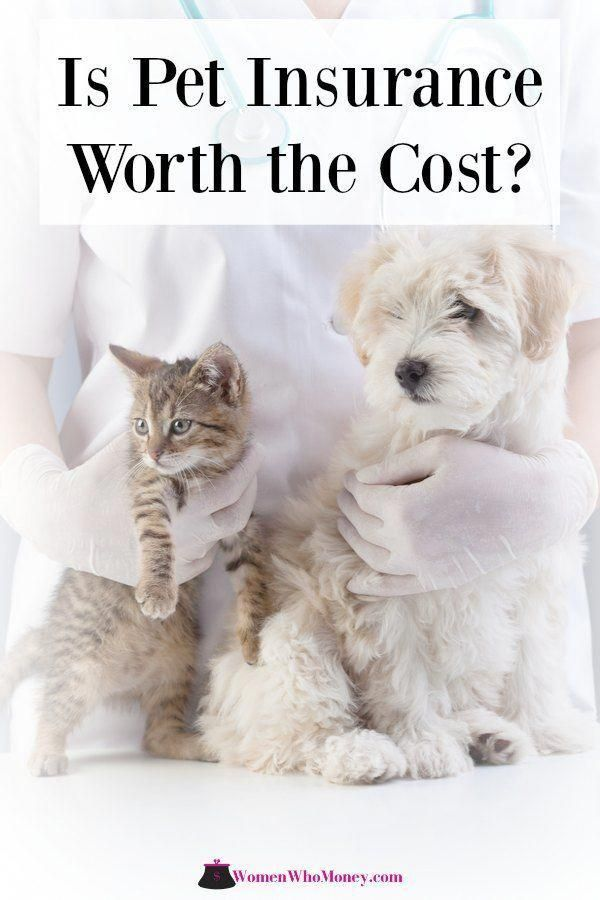 Is Pet Insurance Really Worth The Money? Pet insurance