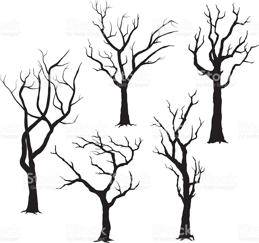 A vector illustration of Tree Silhouettes Illustration