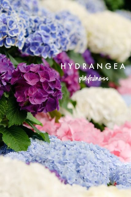 Hydrangea Means Playfulness Talking Flowers A Valentine S Day Guide To Flower Meaning Via Finding Shibusa Flowers Hydrangea Beautiful Flowers