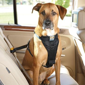 Just Found This Dog Safety Harness Tru Fit Smart Harness