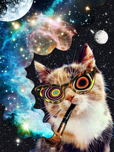 meow in space.