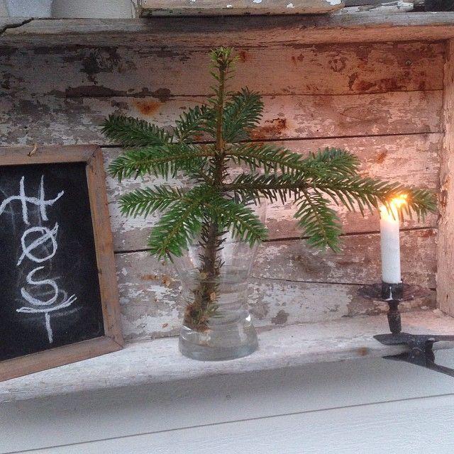 En liten grannusk til pynt  #høstdekor#uterom#landliv#gamleskatter#vintergrønt#levlandlig#