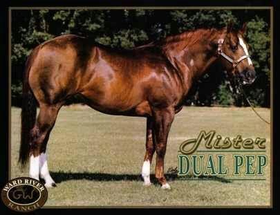 Mister Dual Pep