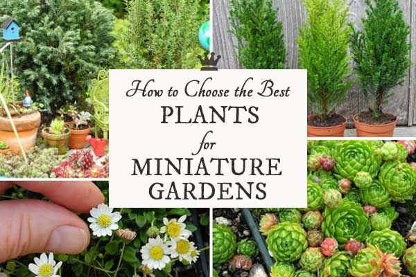 Expert Advice On How To Choose The Best Plants Containers And Accessories For Your Indoor Outdoor Miniature Gardens
