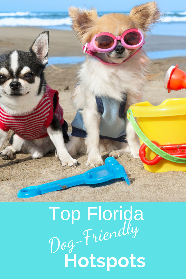 The Best Dog Friendly Vacation Hotspots In Florida Betsi S World Dog Friendly Vacation Dog Friends Dog Friendly Beach
