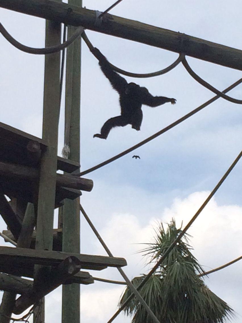 Lowry Park Zoo, Tampa, FL