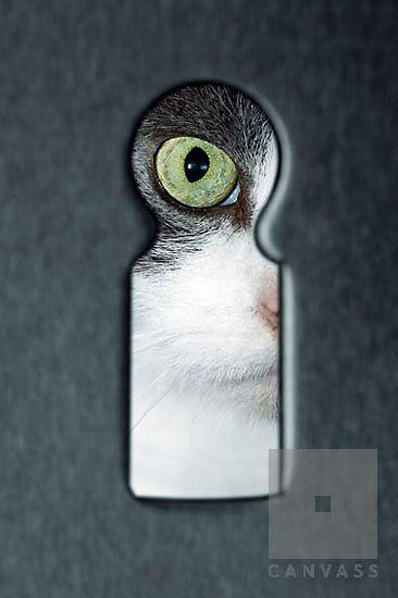 Animal Eyes Close Up | Animals Cat Cats eye Close Up Couching Detail Domestic animal Eye Eyes ...