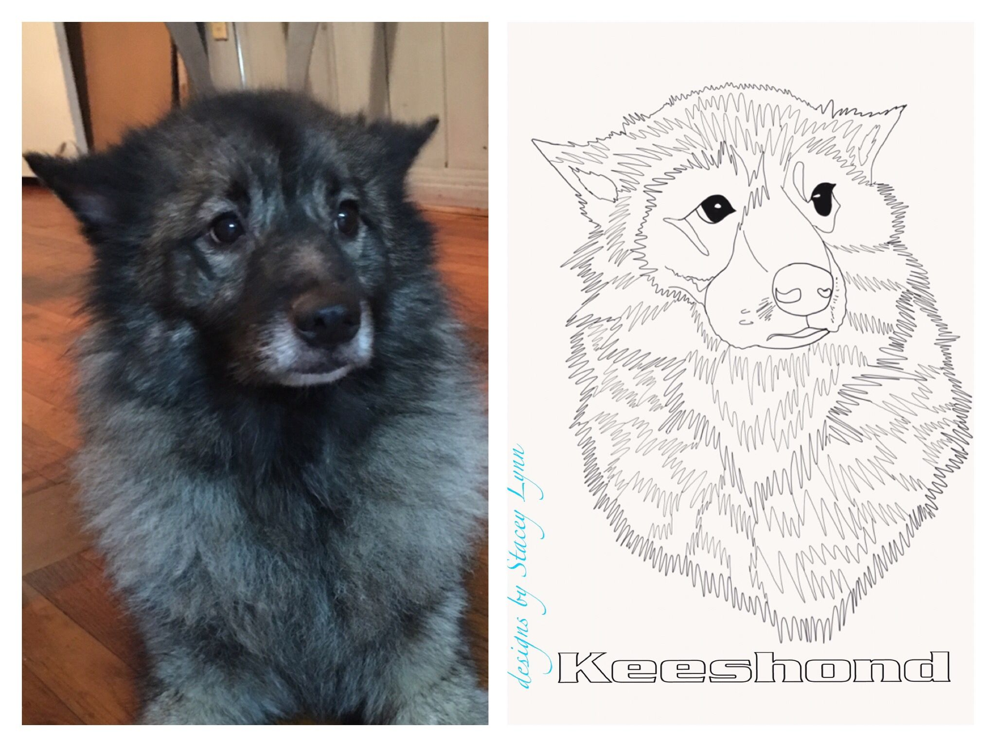 custom keeshond coloring page