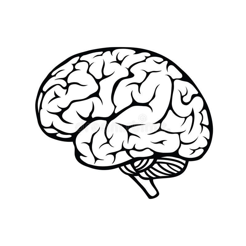 Human Brain Vector Outline Illustration Of Human Brain On White Background Affiliate Vector Outli Brain Illustration Brain Drawing Outline Illustration