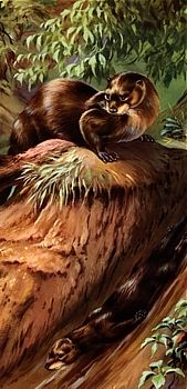 Your Animal Spirit for Today January 12, 2016  Otter Otter represents one of the most playful feminine energies on earth—and she has swum over into your reading to bring a message of joyful play. I...
