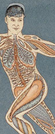 New York Times Derek Jeter baseball - Anatomy illustration by Katie Scott
