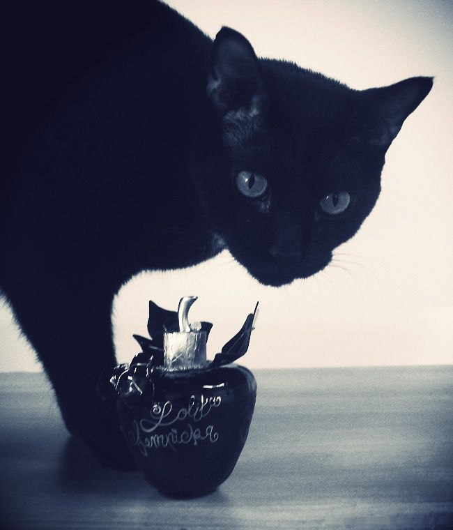 black cat have that dark elagants to them especialy in black and white pictures.