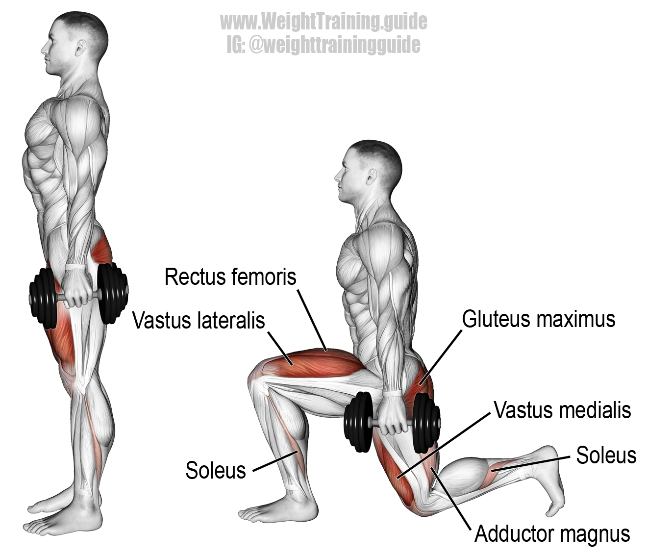dumbbell lunge a highly recommended compound exercise