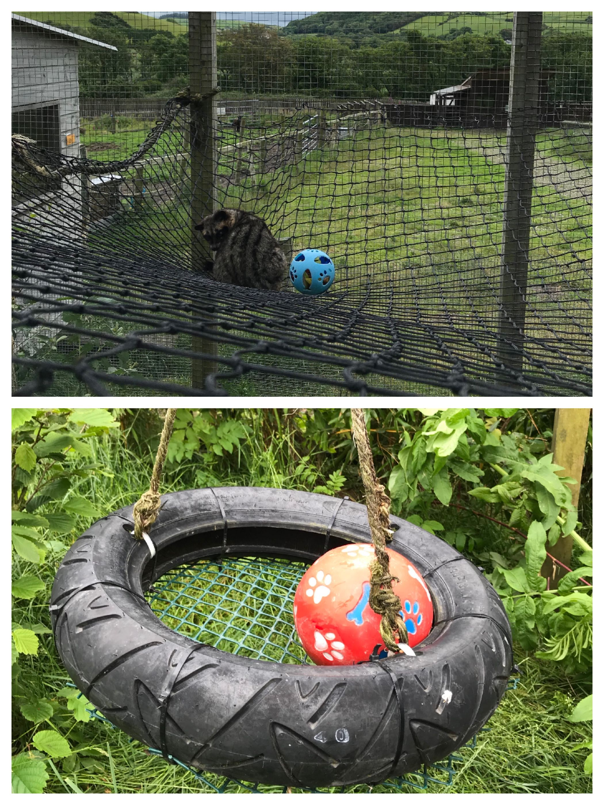 Food placed into food dispense balls; balls then placed on