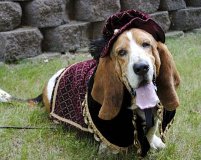 Custom Renaissance Tudor Royal Ringbearer Dog Pet Costume outfit for LARGE XL pet & Custom Renaissance Tudor Royal Ringbearer Dog Pet Costume outfit for ...