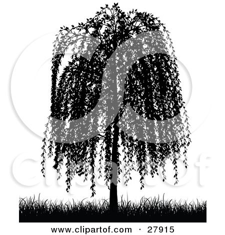 Willow Tree Tattoo Weeping Willow Tree Tattoo Meaning Ink